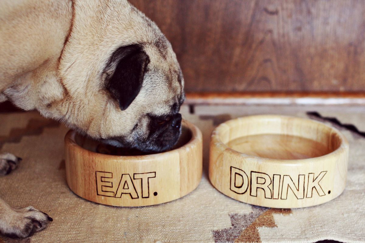 food for dogs